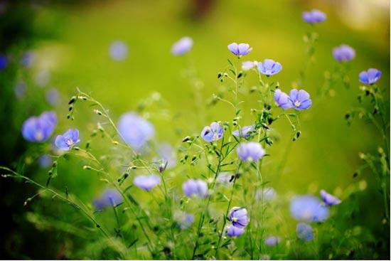 新申亚麻|这个地方 不仅能赏花 还能体验N种亚麻生活!